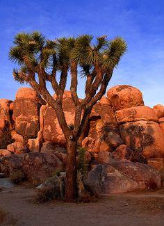 Joshua Tree NP..amazing granite desert.