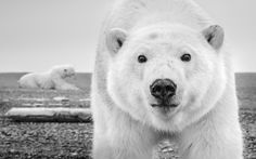 "David Yarrow's ""Wild Encounters"" is a triumph of conservation photography"