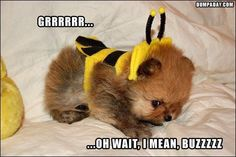 Random Funny Pictures – 41 Pics