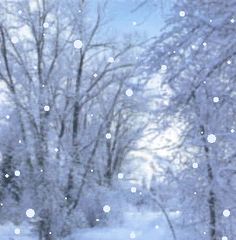 animated christmas and winter snow   WPFF - Past Animated Graphics - Holidays