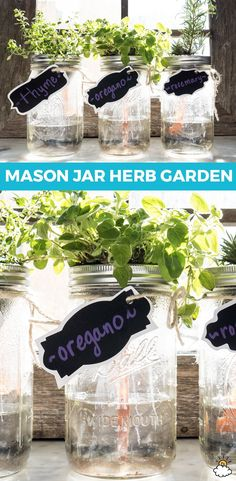 Turn your old mason jars into fun DIY Indoor Herb Gardens. Don't have a yard for planting? No worries! Our DIY Indoor Herb Garden uses mason jars and old applesauce cups to bring the outdoors in Mason Jar Herbs, Pot Mason Diy, Mason Jar Herb Garden, Diy Herb Garden, Mason Jar Flowers, Mason Jar Crafts, Herbs Garden, Garden Tips, Garden Pallet