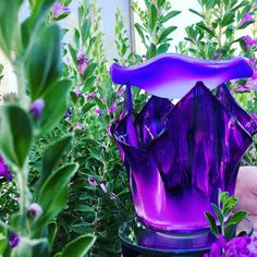 Lavender Inspired Tulip Shaped Glass Electric Oil Warmer. This warmer has a dimmer switch about ¼ of the way down the wire allowing you to control the light. The light can shine brightly or dim calmly setting the tone for any mood. It is approximately 4¼ inches wide and 6 inches tall. Electric Oil Warmer, 6 Inches, Aromatherapy, Tulips, Diffuser, Lavender, Essential Oils, Fragrance, Wire