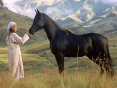 The Young Black Stallion, drakensberg south africa All The Pretty Horses, Beautiful Horses, Black Stallion Movie, Horse Background, Horse Movies, Pur Sang, The Daily Beast, Black Horses, Young Black