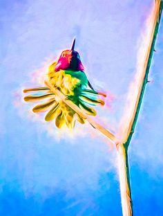 Hummingbird Art - Energy Glow by Priya Ghose #hummingbird #art #hummingbirdart @priyaghosephoto