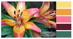 Digital Harmony Design Studio - Journal - SKC Color palette June/July 2012