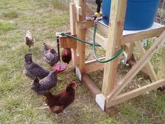 Have the water from the chicken house roof top collect in rain barrel to auto water the chickens