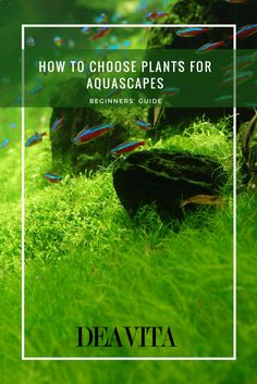 How to choose plants for aquascapes – this is one of the most important questions when one decides to start his first (or next) aquascaping project. Aquascapes combine a number of
