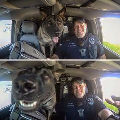 say cheese sandwich please! Military Working Dogs, Military Dogs, Police Dogs, Cute Funny Animals, Funny Animal Pictures, Funny Dogs, I Love Dogs, Cute Dogs, War Dogs