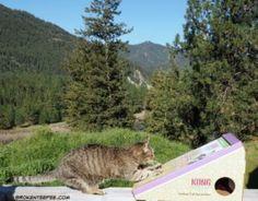 Stinky the Farm cat, Kong Naturals eco friendly cat scratcher, cat scratcher, Chewy.com, #ad