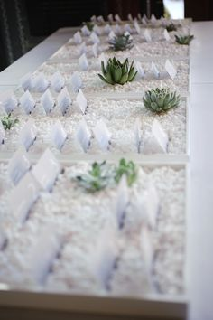 escort in white rocks/beach glass with succulents