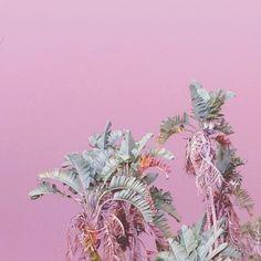 Pink smoke sky