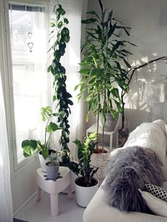 This vegetation can also be presented in the corner of your apartment room. Cozy Living Rooms, Living Spaces, Exotic House Plants, Belle Plante, Loft House, House Layouts, Of Wallpaper, Simple House, Plant Decor