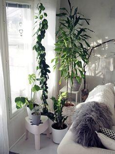 Huonekasvien mullanvaihtoon hyvät vinkit