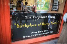 the elephant house, Edinburgh