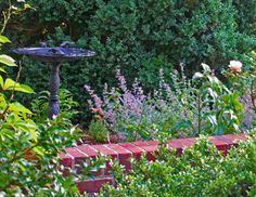 A sunny perennial garden and a bird bath. Catmint, Roses, Butterfly Bush, Purple Fountain Grass, Coneflower and more. By Susan Schlenger