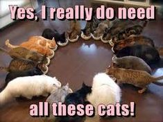 Image result for yes i really do need all these cats