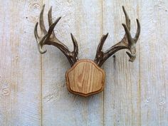 """(Item: Dark Oak """"The Deer Stand"""" Antler Mount Kit. The Deer Stand is a simple, fast and attractive way to display your antlers. Set your antlers on The Deer Stand. Antler Mount, Antler Art, Antler Crafts, Taxidermy Decor, Taxidermy Supplies, Faux Taxidermy, Deer Mounts, Shed Antlers, Laser Engraving"""
