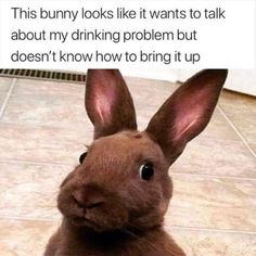 Super Funny Pictures, Funny Animal Pictures, Funny Images, Funniest Pictures, Hilarious Pictures, Funniest Memes, Funny Videos, Funny Morning Memes, Morning Humor