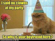 Happy Birthday or else - LOLcats is the best place to find and submit funny cat memes and other silly cat materials to share with the world. We find the funny cats that make you LOL so that you don't have to. Funny Cat Compilation, Funny Cat Memes, Funny Cat Videos, Funny Animal Pictures, Animal Pics, 9gag Funny, Funny Captions, Memes Humor, Movie Captions