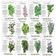 Biennial Plants, Summer Savory, Seed Shop, Types Of Herbs, Types Of Basil, Types Of Plants, Herb Seeds, Herbs Indoors, Medicinal Herbs