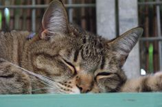 Muis ligt heerlijk te slapen in de buitenren van Dierenpension Ingen