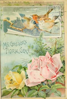 Front cover of McGregor's 'Floral Gems' 1895 with an illustration of roses and birds. McGregor Brothers. Springfield, Ohio.archive.org