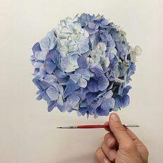 Art by Michael Zavros - Hydrangea watercolor