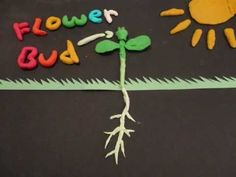 Plant Videos for Students - Primary Theme ParkPrimary Theme Park