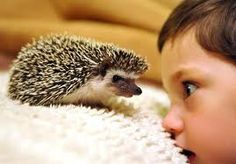 hedgehog: my territory! puff!