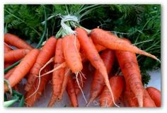 Growing Carrots, Planting Carrots, How to Grow Carrots