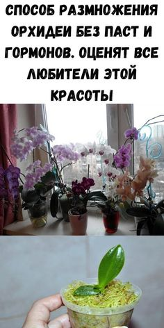 Morning Glory Plant, Small Farm, House Plants, Orchids, Food And Drink, Garden, Flowers, Indoor House Plants, Garten