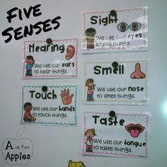 5 senses posters {FREEBIE}