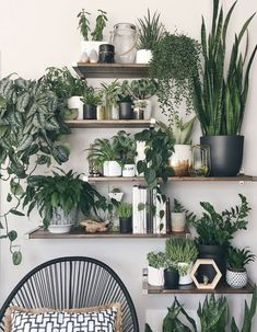 Amazing House Plants Indoor Decor Ideas Must 45 Room With Plants, House Plants Decor, Plant Decor, Bedroom Plants Decor, Living Room Green, Living Room Decor, Living Rooms, Wall Design, House Design