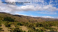Enoturismo Al sur de Granada. Contraviesa-Alpujarra
