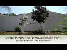 Tampa Bee Exterminator Part 2 of 2