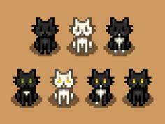 Black-White-Tuxedo Cat Recolors by beachhotdog Piskel Art, Pix Art, Valley Cats, Warrior Cats Funny, Pixel Art Games, Pixel Design, Cat Character, Perler Bead Art, White Tuxedo
