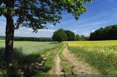 Les plus belles photos de nature - Un arbre au bord d'un chemin de campagne. - PHOTO-PAYSAGE.COM :)