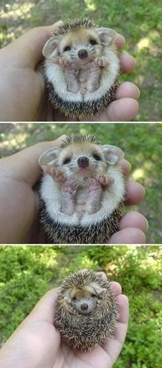 My birthday is coming up... The hard part would be coming up with the right name for all this adorableness!