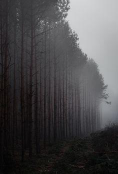 bosques brumosos por Denny Bitte: dennybitte