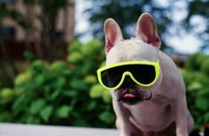 stunner shades from hipster puppies