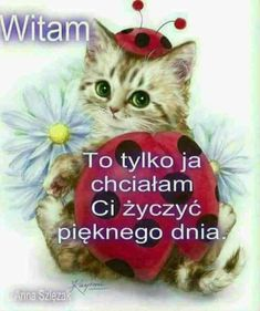 Kotek 9 Fairy Wallpaper, Man Humor, Motto, Positive Vibes, Animals And Pets, Jokes, Cats, Funny, Pictures