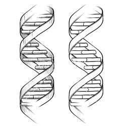 Doodle dna double helix vector 1112437 - by lhfgraphics on VectorStock®