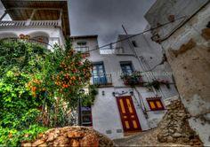 Oranges in the lane, Mojacar Pueblo, Almeria, Spain