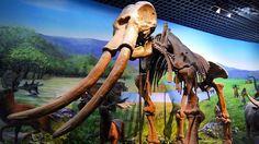 #Dinosaur exhibit at The Inner Mongolia #Museum in #Hohhot, #China ⠀  Photo: Martin Klimenta ⠀  #ChinaTravelwithMIR #chinatravel #chinatourism #visitchina #innermongolia #dinosaursofinstagram #fossils #travel #tourism #wanderlust #worlderlust #beautifuldestinations #instapassport #travelgram #seetheworld #adventuretravel #neverstopexploring #dinobones #history