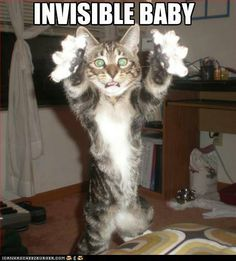 Invisible LOL Cats!