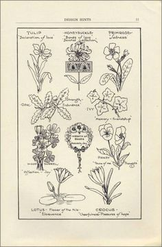 design_hints_8-1927_p11_tulip_honeysuckle_primrose_lotus_crocus_oak_ivy_wood_sorrel.jpg (499×762)