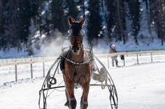CHEVAUX COURSES HIPPIQUES PARI PMU ARGENT FACILE GAGNER ARGENT PRONOSTICS Courses Hippiques, Passion, Horses, Jouer, Animals, France, Paris, Simple, Easy Earn Money