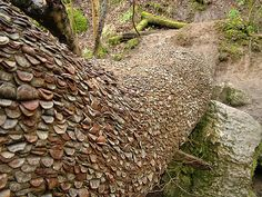 Coin Wishing Tree in Swila Glen, UK. In the 1700's, it was used as a wishing tree. People believed that a person suffering from an illness could hammer a coin into the tree trunk and the tree would take the illness away, but if someone removed the coin, they themselves would become ill.