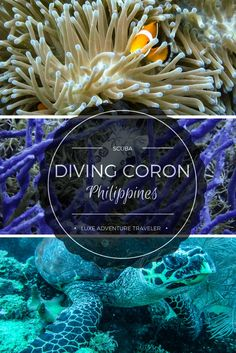 A look at some ship wreck, reef and other dive sites in Coron, Philippines