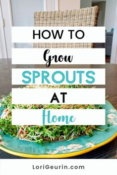 Learn how to grow sprouts from home in this quick and easy tutorial and video. Sprouts are fun and easy to grow and so nutritious to eat. You can grow broccoli, mung bean, alfalfa, and other types of sprouts using trays or Mason jars. #howtogrowsprouts #sprouts #broccolisprouts #growsproutsindoors #growsproutsinatray #microgreens Broccoli Sprouts, Hobbies To Try, Hobbies That Make Money, Diy Crafts And Hobbies, Growing Sprouts, Good Sources Of Calcium, Alfalfa Sprouts, Mung Bean